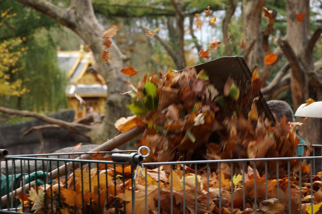 halloween-kuerbisse-mantelpaviane-gehege-herbst-blaetter-tierpark-hagenbeck-hamburg-2013-andres-lehmann