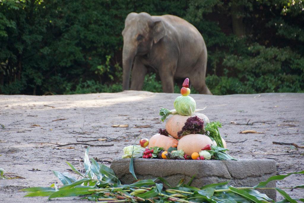 tierpark-hagenbeck-herbstspaziergang-elefanten-kuerbisse-mahlzeit-2013-andres-lehmann
