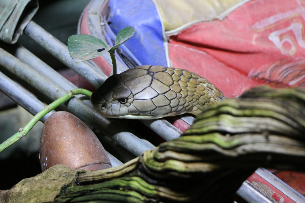 tropen-aquarium-hagenbeck-kobra-schatten-2014-andres-lehmann