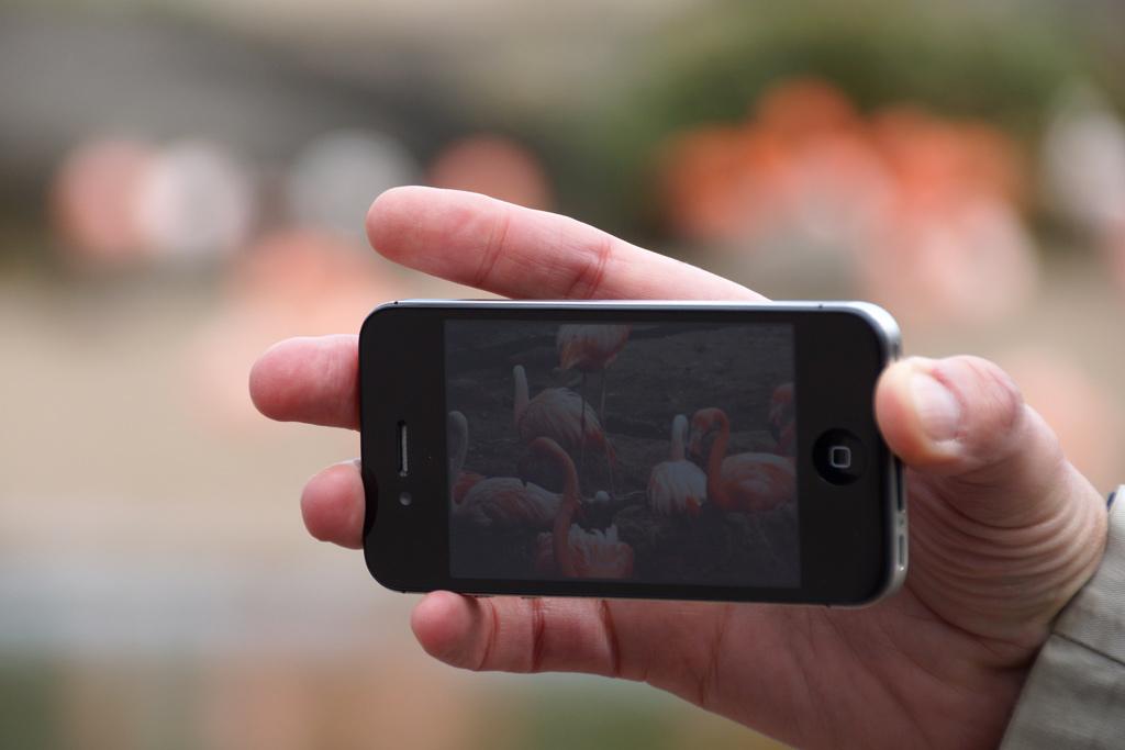 tierpark-hagenbeck-app-iphone-flamingos-andres-lehmann