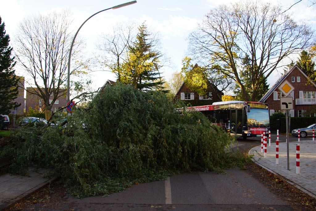 sturm-orkan-tief-christian-lokstedt-baum-strasse-blockiert-bus-2013-andres-lehmann
