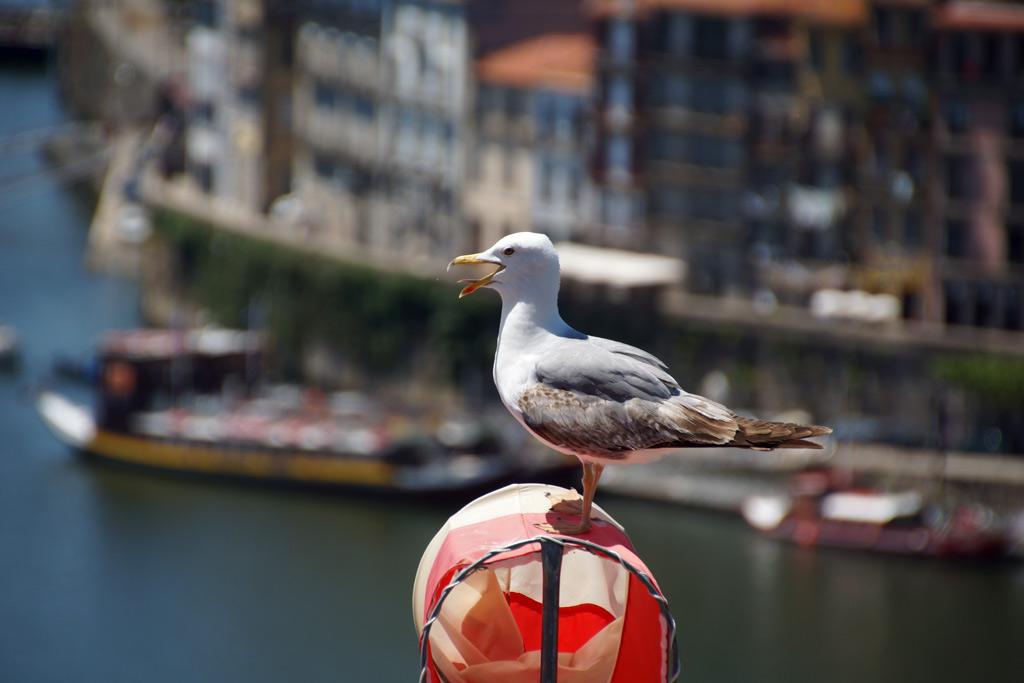 porto-moewe-portugal-reise-2014-andres-lehmann