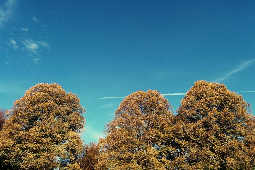 november-hamburg-stadtpark-2014-andres-lehmann