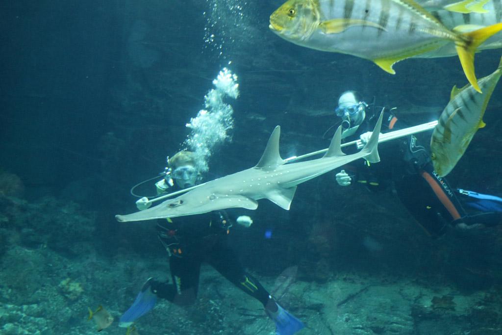 tropen-aquarium-hagenbeck-inventur-geigenrochen-messen-2014-andres-lehmann