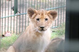 http://ukonio.de/givskud-zoo-morgen-tour-safari-bildergalerie-53412/