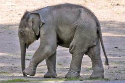 klein-anjuli-elefanten-baby-tierpark-hagenbeck-romantiknaechte-2015-frank-burmester